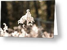 Bush In The Wind Greeting Card