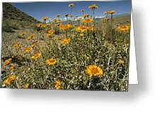 Bush Sunflowers Grow On Arid Slope Greeting Card