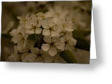 Bushel Of Flowers Greeting Card