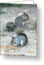 Bushy Tails Greeting Card