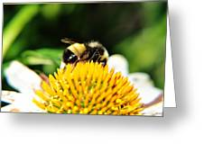 Busy Bee Collecting On Echinacea Pow Wow Greeting Card
