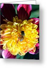 Busy Bee On Yellow Flower Greeting Card