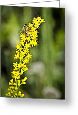 Busy Bee On Yellow Wildflower Greeting Card
