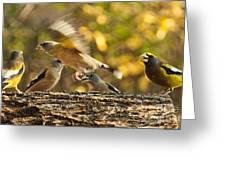 Busy Birds Greeting Card