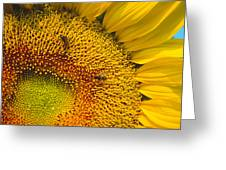 Busy Sunflower Greeting Card