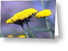 Butter Weeds Greeting Card
