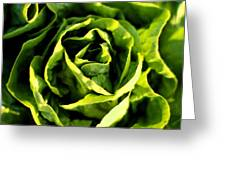 Buttercrunch Lettuce From Above Greeting Card