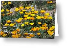 Buttercups In The Desert Greeting Card
