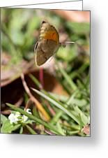 Butterflied Greeting Card