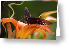 Butterflies Are Free... Greeting Card