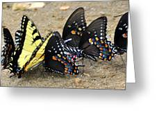 Butterflies By The Buches Greeting Card