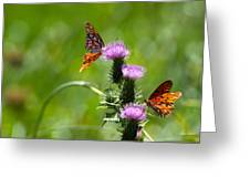 Butterflies On Thistles Greeting Card
