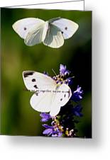 Butterfly - Cabbage White - As One Greeting Card