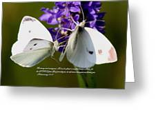 Butterfly - Dueteronomy 31 6 Greeting Card