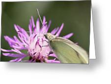 Butterfly - Plain And Simple Greeting Card