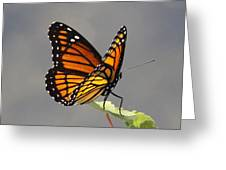 Butterfly - Sitting On The Green Greeting Card