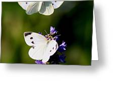 Butterfly - Visiting Greeting Card