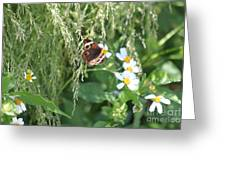 Butterfly 11 Greeting Card