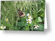 Butterfly 12 Greeting Card