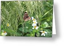 Butterfly 14 Greeting Card