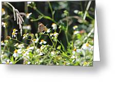 Butterfly 17 Greeting Card