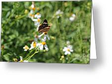 Butterfly 23 Greeting Card