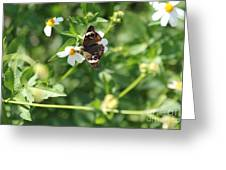 Butterfly 25 Greeting Card
