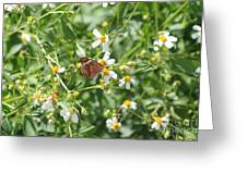 Butterfly 31 Greeting Card