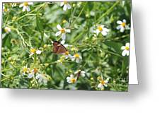 Butterfly 32 Greeting Card