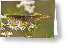 Butterfly 3319 Greeting Card