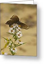 Butterfly 3321 Greeting Card