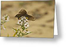 Butterfly 3322 Greeting Card