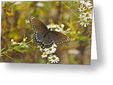 Butterfly 3325 Greeting Card
