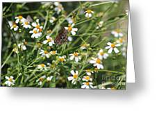 Butterfly 35 Greeting Card