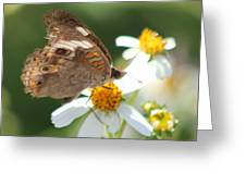 Butterfly 39 Greeting Card