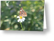 Butterfly 42 Greeting Card
