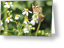 Butterfly 44 Greeting Card