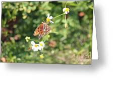 Butterfly 46 Greeting Card