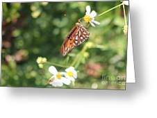 Butterfly 47 Greeting Card