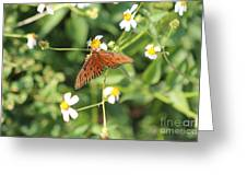 Butterfly 48 Greeting Card