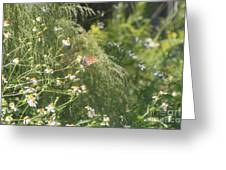 Butterfly 50 Greeting Card