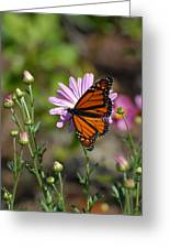 Butterfly 89 Greeting Card
