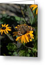 Butterfly 90 Greeting Card