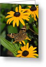 Butterfly 94 Greeting Card