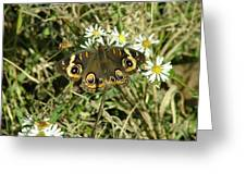 Butterfly And Flowers Greeting Card