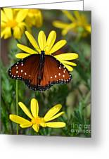 Butterfly And Yellow Flowers Greeting Card