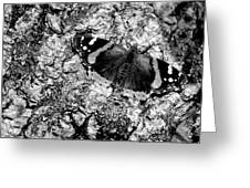 Butterfly Bark Black And White Greeting Card