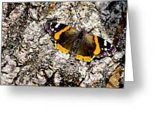 Butterfly Bark Greeting Card