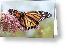Butterfly Beauty - Monarch IIi Greeting Card