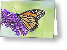 Butterfly Beauty-monarch Greeting Card